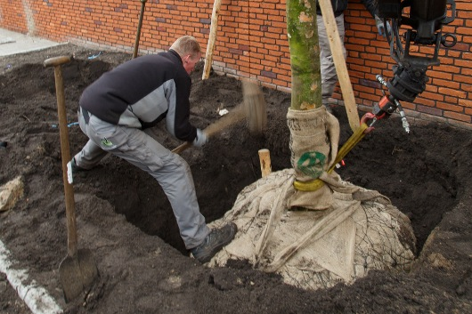 Beplanting boomplaatsing