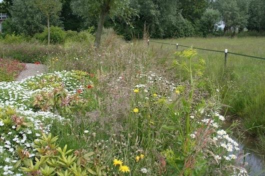 Beplanting wilde bloemen