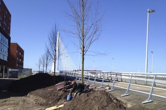 Beplanting langs brug