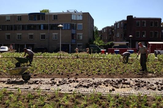 Beplanting woonwijk
