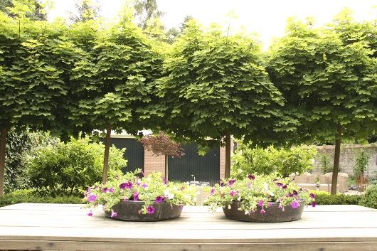 Tuin Renoveren Kosten : Particulieren tuinontwerp en aanleg tuin laten aanleggen