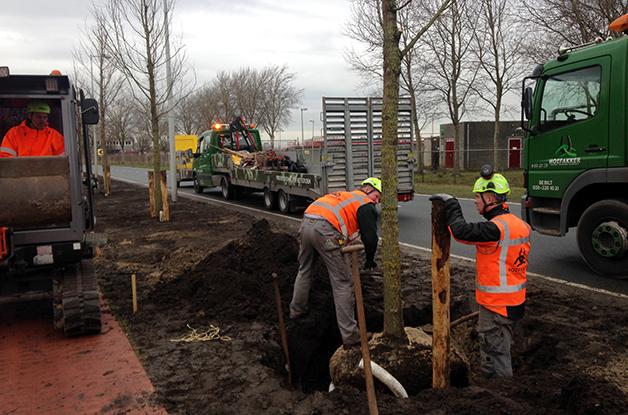 Aanplant bomen 31 stuks Acer campestre 'William Caldwell' Donauweg Amsterdam (1) 628