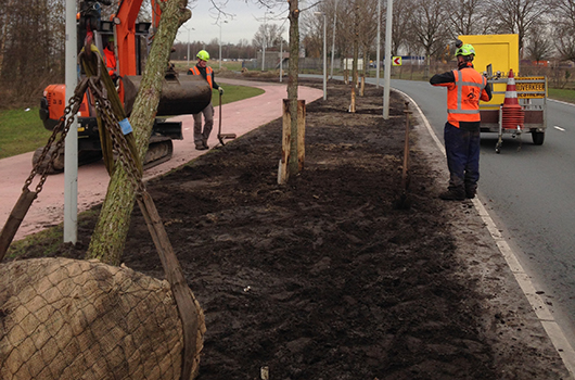 Aanplant bomen 31 stuks Acer campestre 'William Caldwell' Donauweg Amsterdam (2) 530