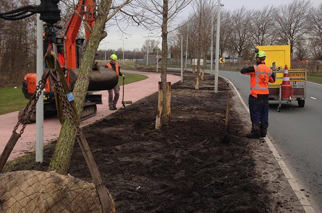 Aanplant bomen 31 stuks Acer campestre 'William Caldwell' Donauweg Amsterdam (2) 628