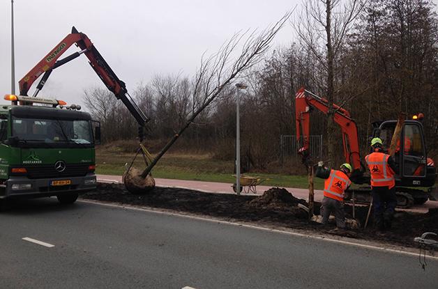 Aanplant bomen 31 stuks Acer campestre 'William Caldwell' Donauweg Amsterdam (4) 628