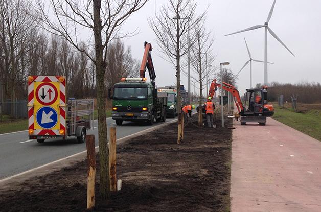 Aanplant bomen 31 stuks Acer campestre 'William Caldwell' Donauweg Amsterdam (5) 628