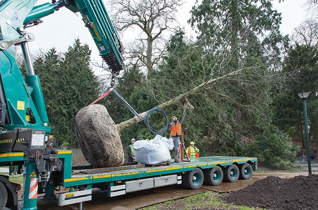 Aanplant grote boom Park Randebroek Amersfoort (2) 628