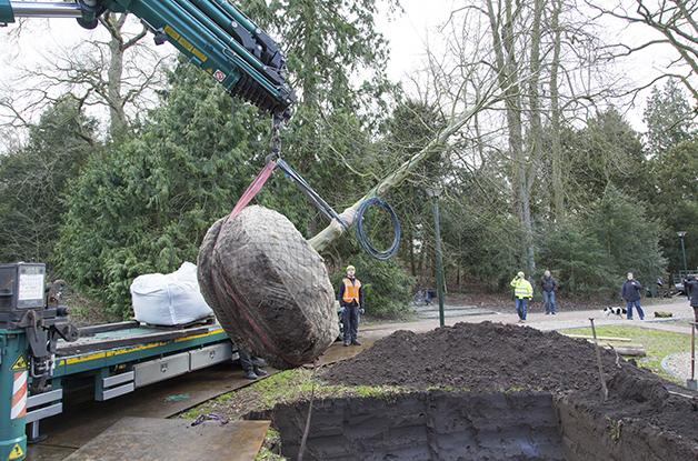 Aanplant grote boom Park Randebroek Amersfoort (5) 628