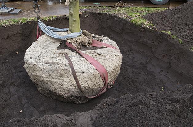 Aanplant grote boom Park Randebroek Amersfoort (6) 628