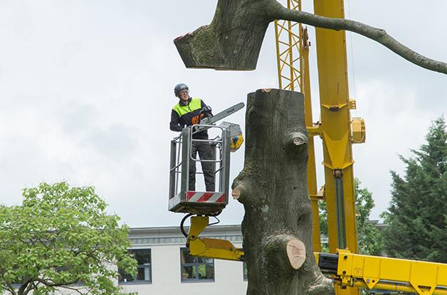 Machinaal vellen van bomen Gemeente De Bilt (1) 628