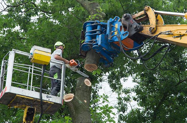 Machinaal vellen van bomen Gemeente De Bilt (5) 628