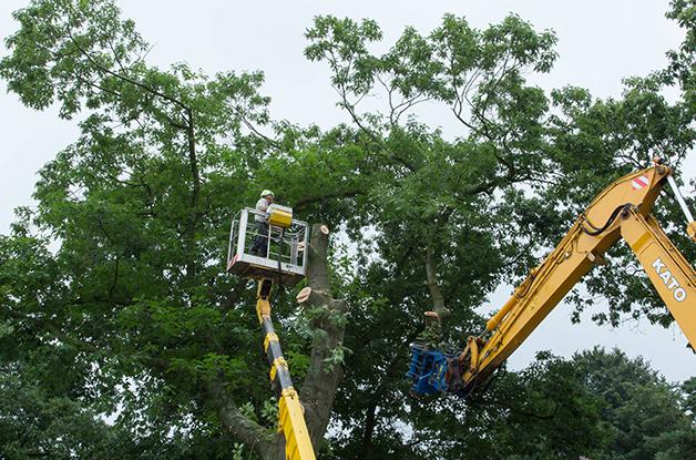 Machinaal vellen van bomen Gemeente De Bilt (6) 628