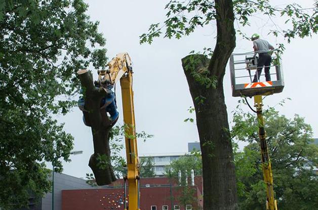 Machinaal vellen van bomen Gemeente De Bilt (7) 628
