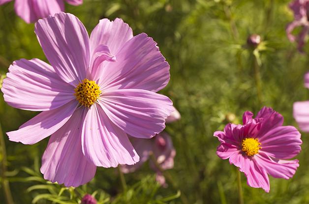 Tuinontwerp en tuinaanleg boerenvilla tuin (6) 628