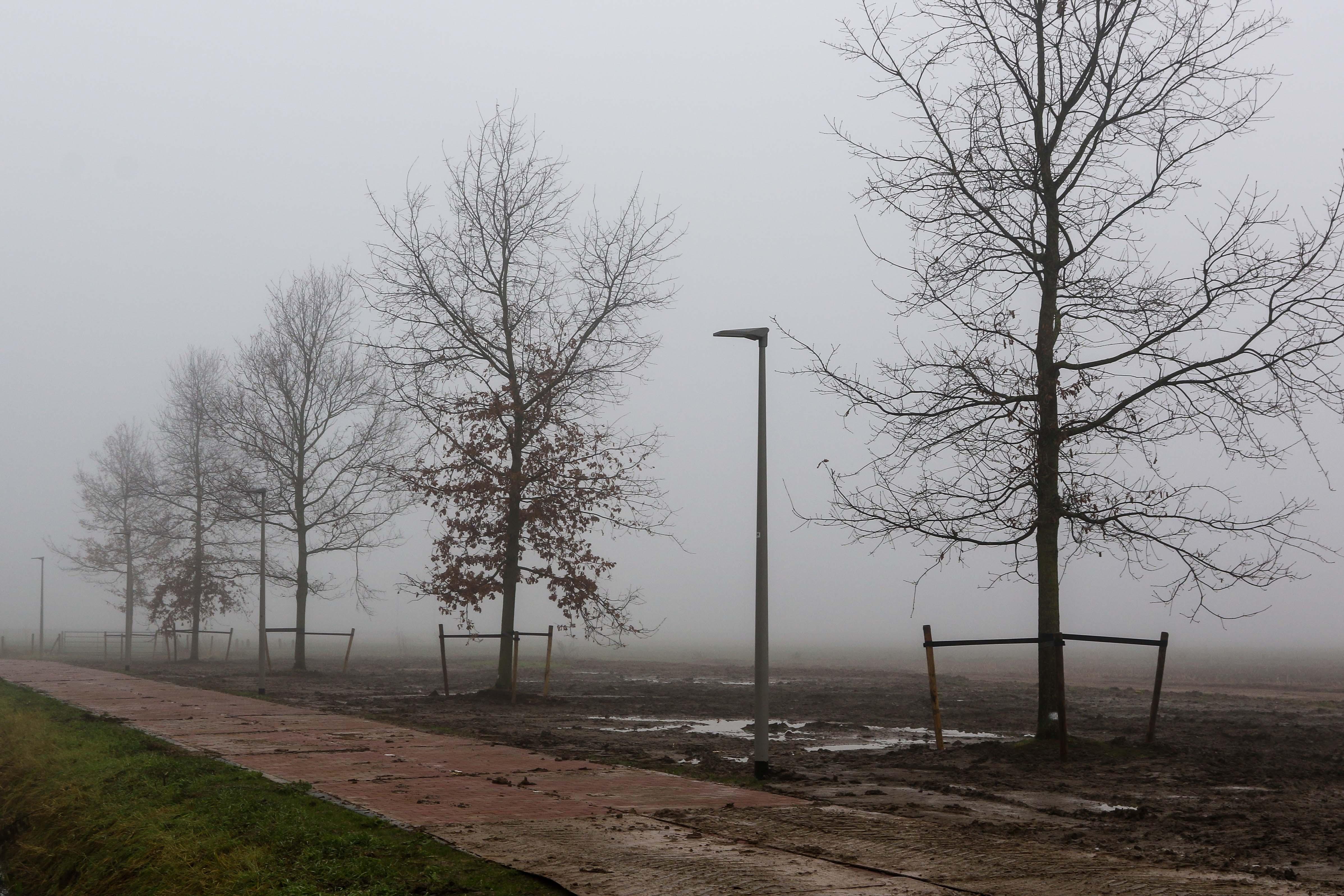 Hoefakker bomen verplaatsen Arnhem (15)