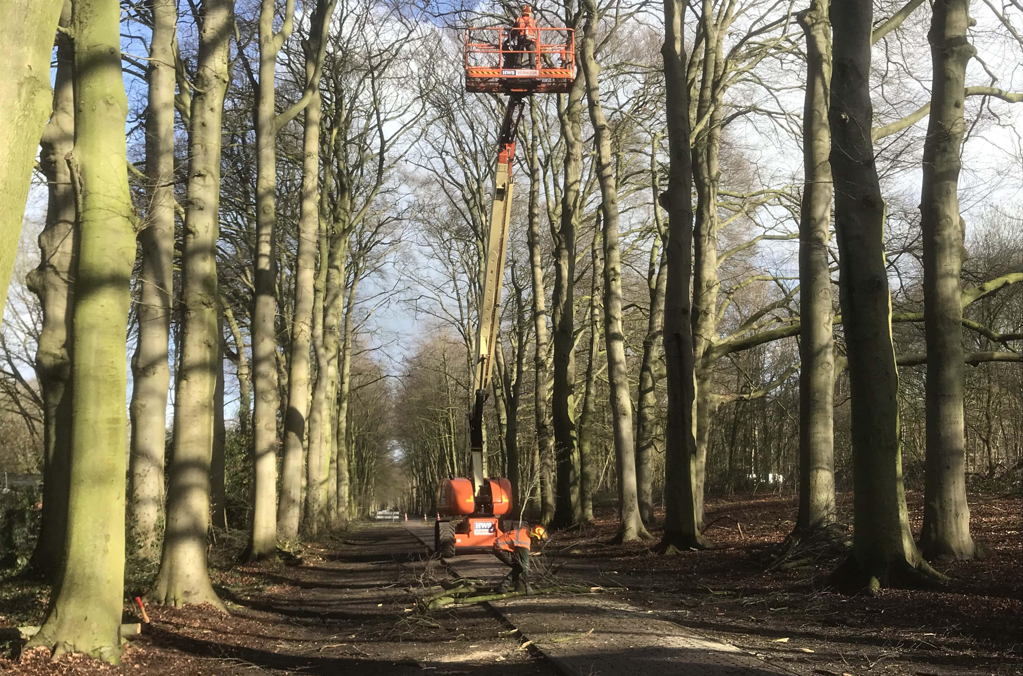 Hoefakker boomspecialisten snoeien monumentale beuken Geldersch Landschap (11m)