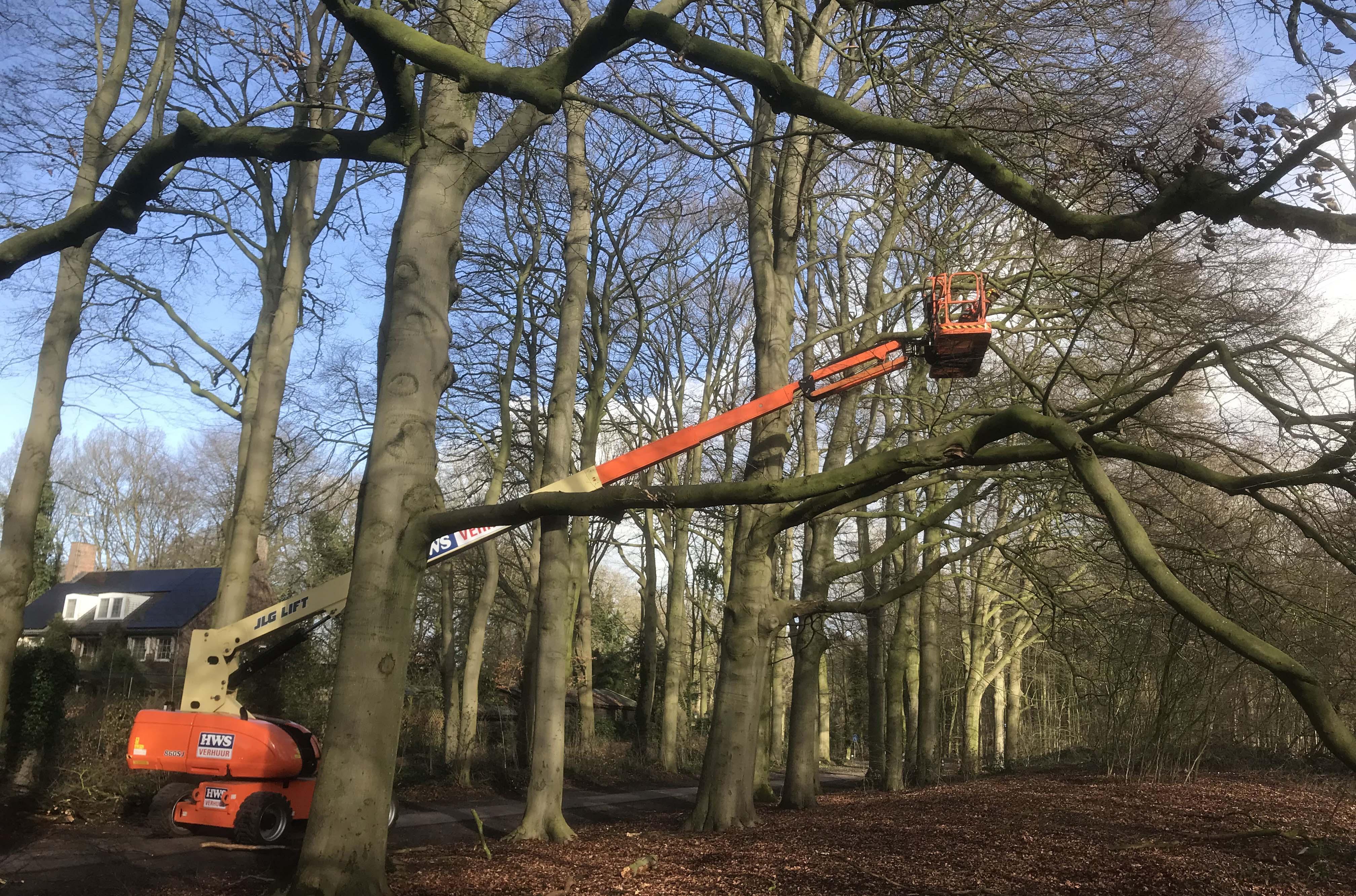 Hoefakker boomspecialisten snoeien monumentale beuken Geldersch Landschap (3m)