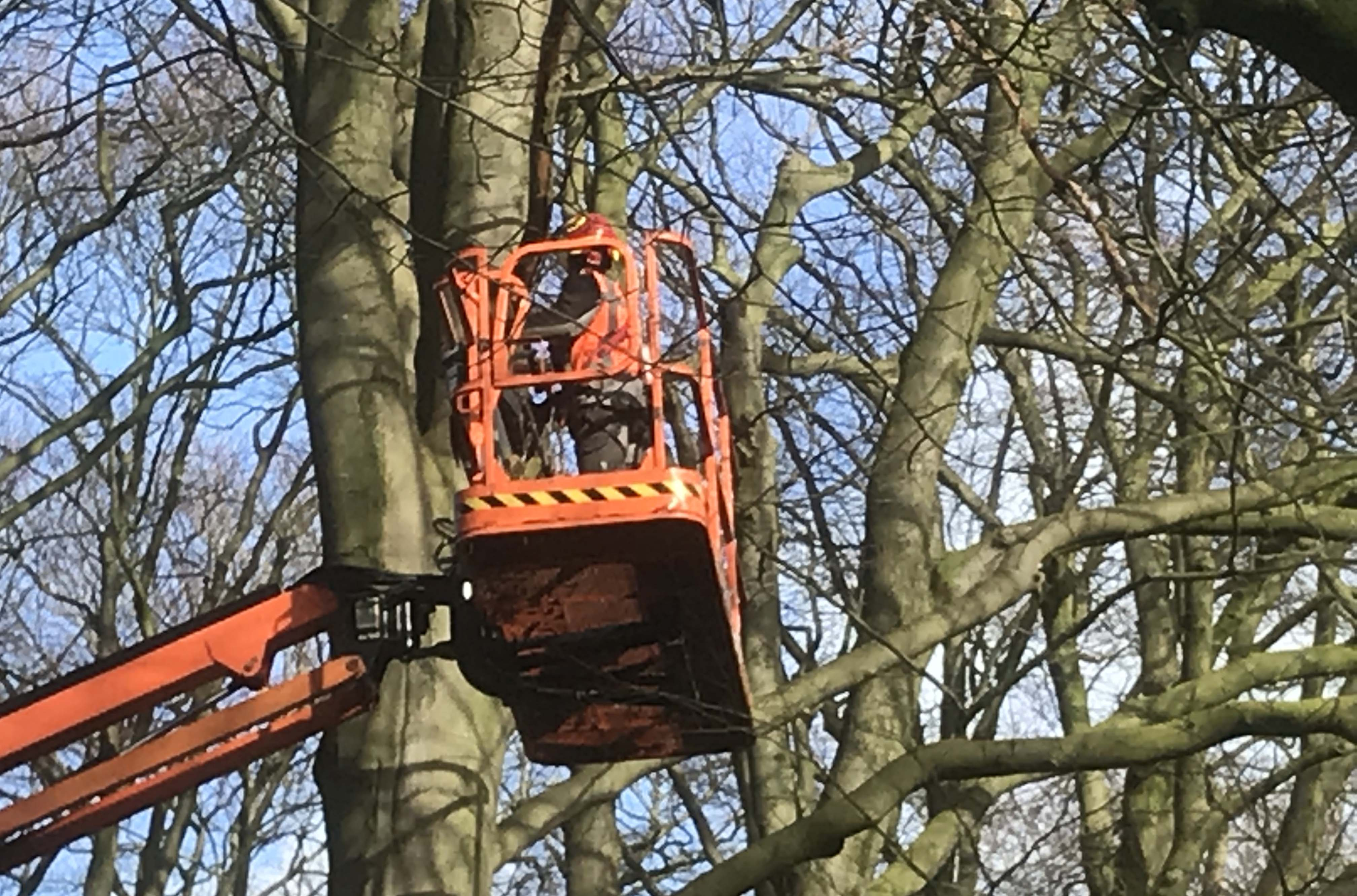 Hoefakker boomspecialisten snoeien monumentale beuken Geldersch Landschap (4m)