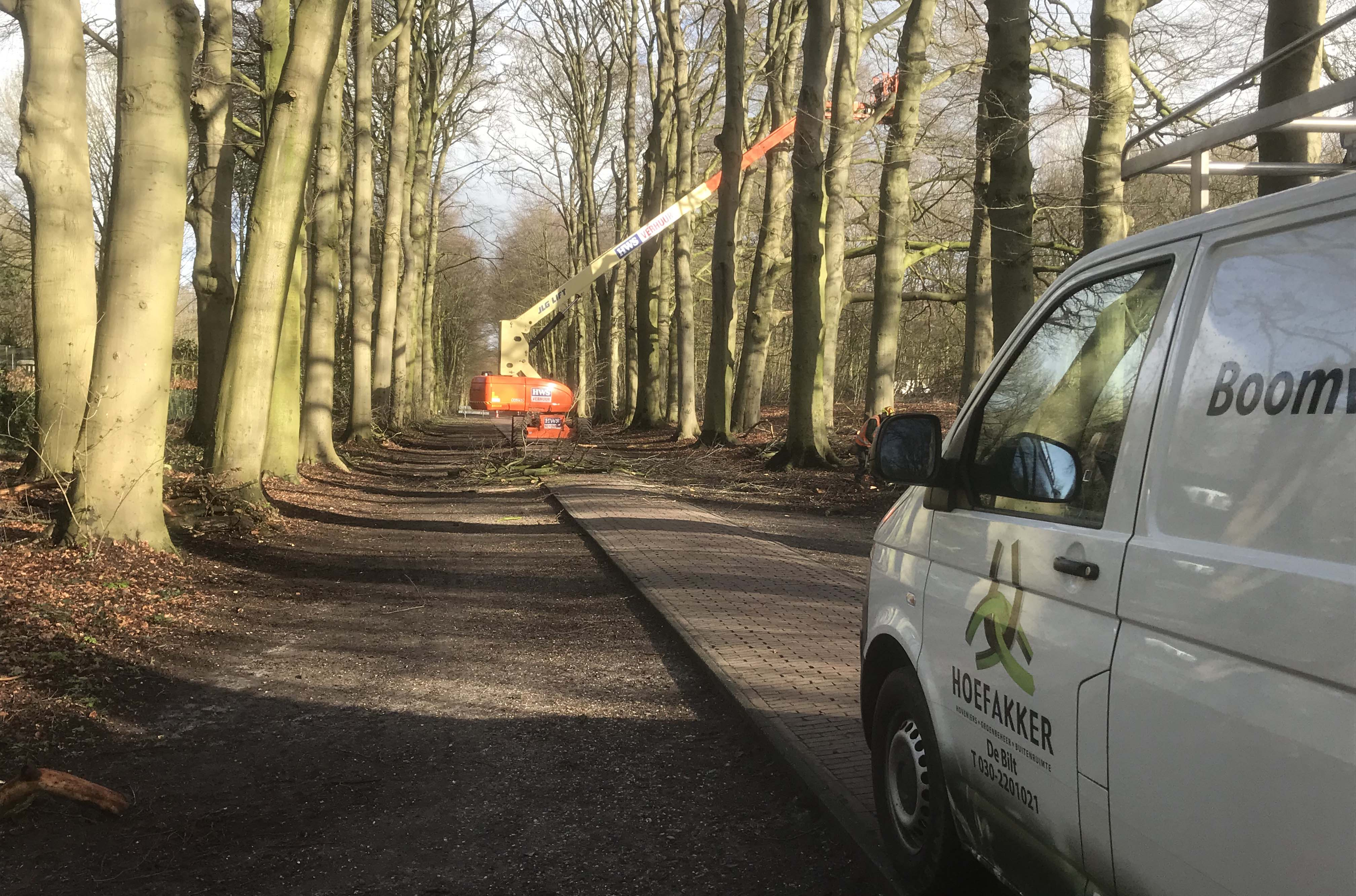 Hoefakker boomspecialisten snoeien monumentale beuken Geldersch Landschap (5m)