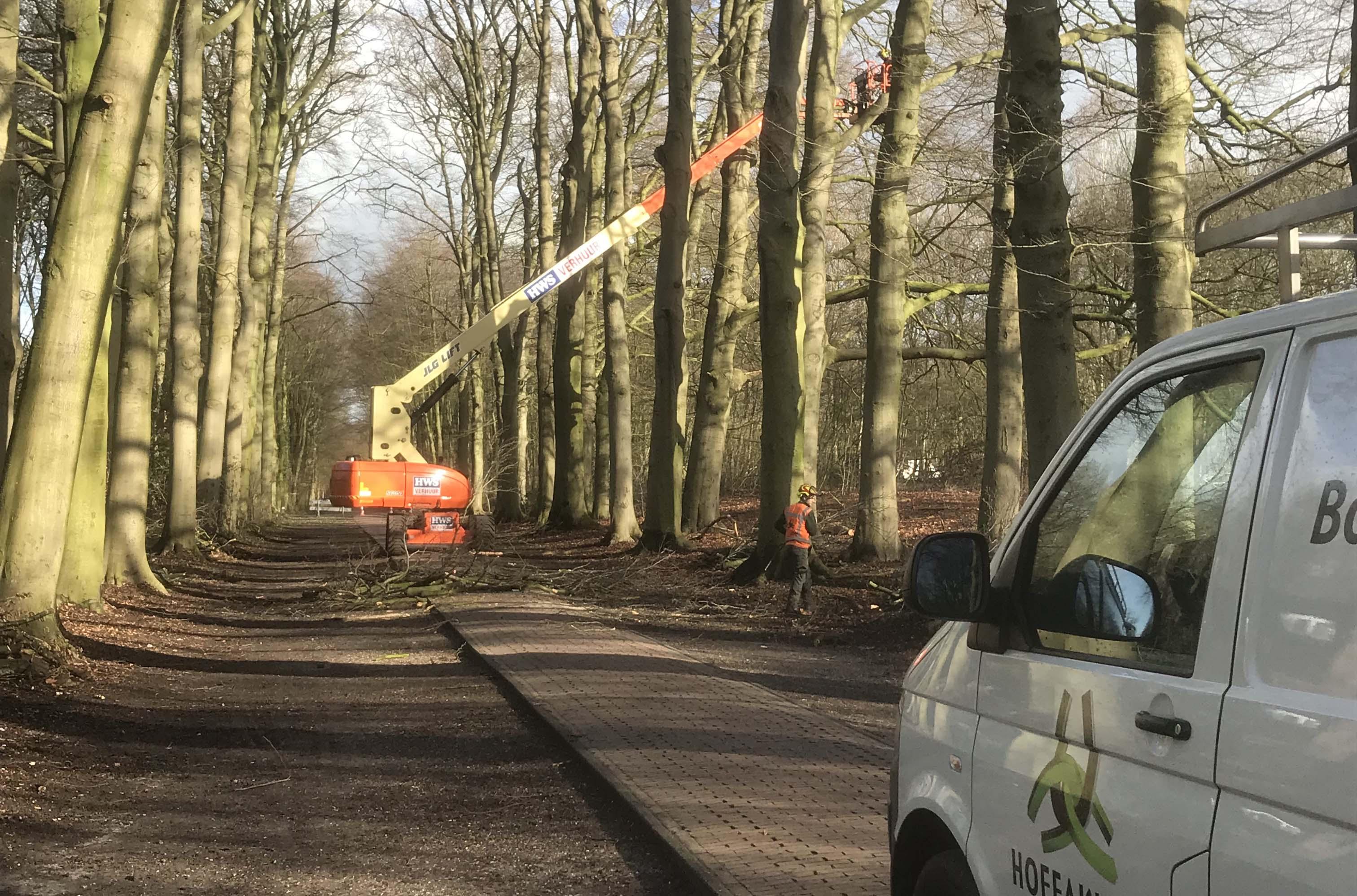Hoefakker boomspecialisten snoeien monumentale beuken Geldersch Landschap (6m)