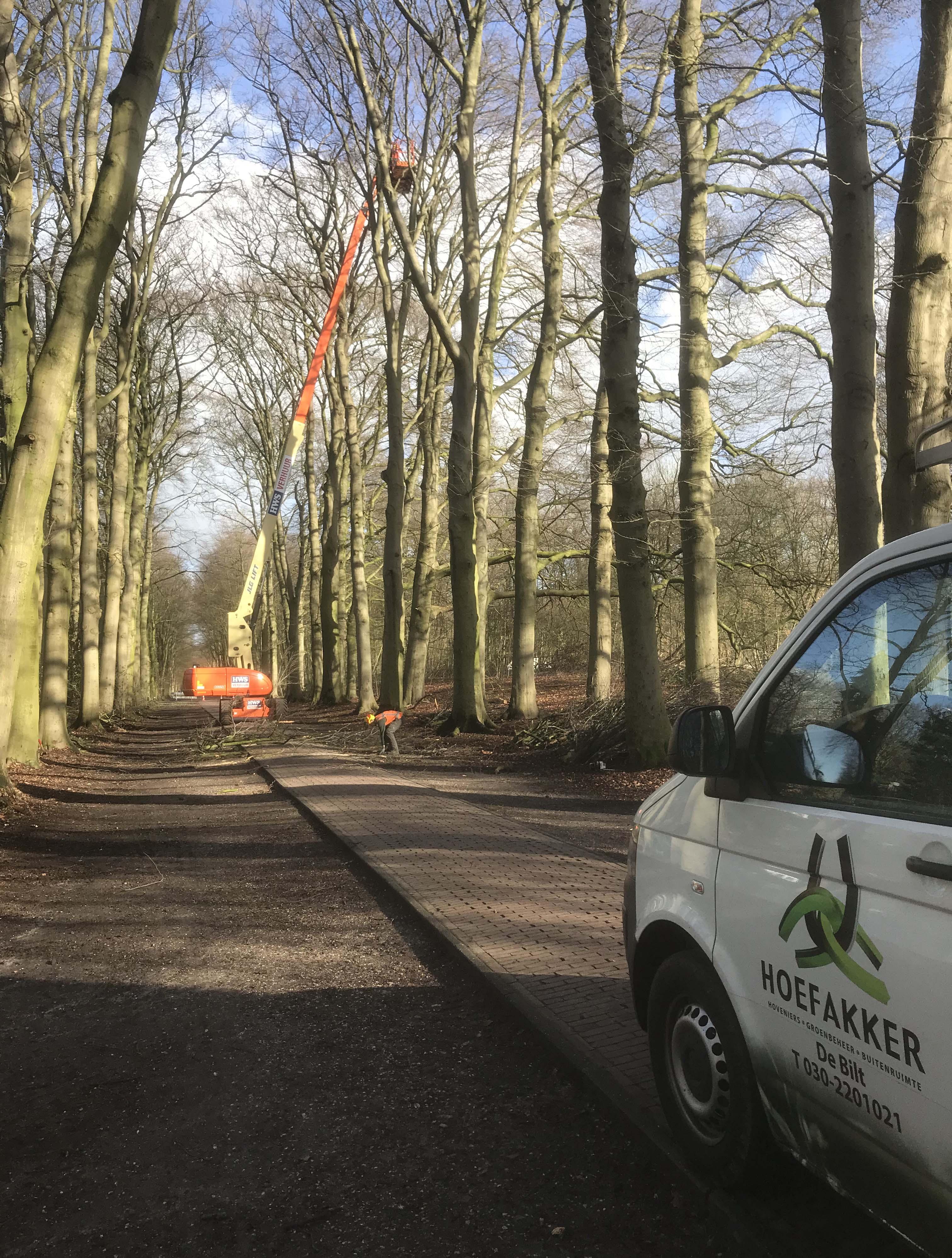 Hoefakker boomspecialisten snoeien monumentale beuken Geldersch Landschap (8m)
