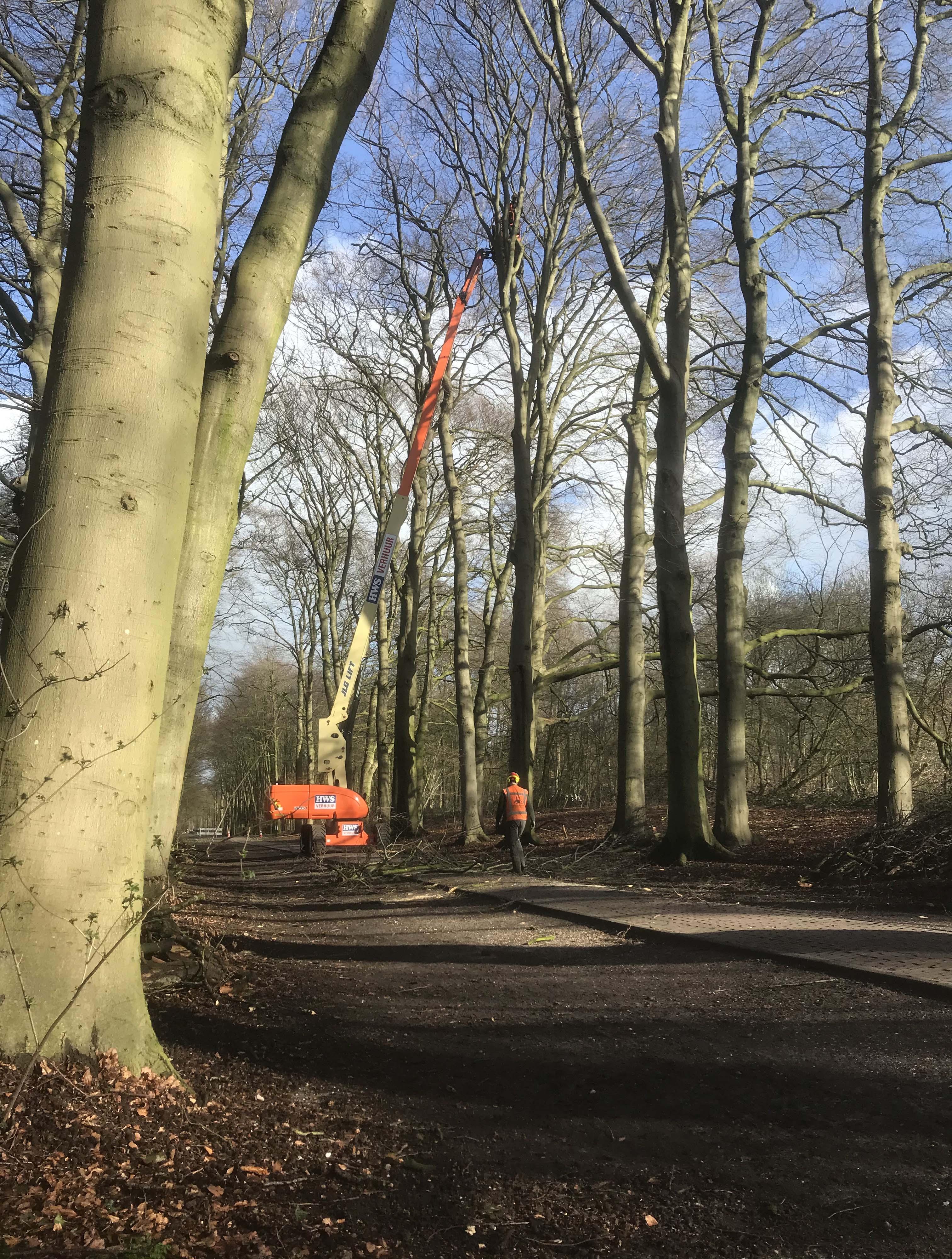 Hoefakker boomspecialisten snoeien monumentale beuken Geldersch Landschap (9m)