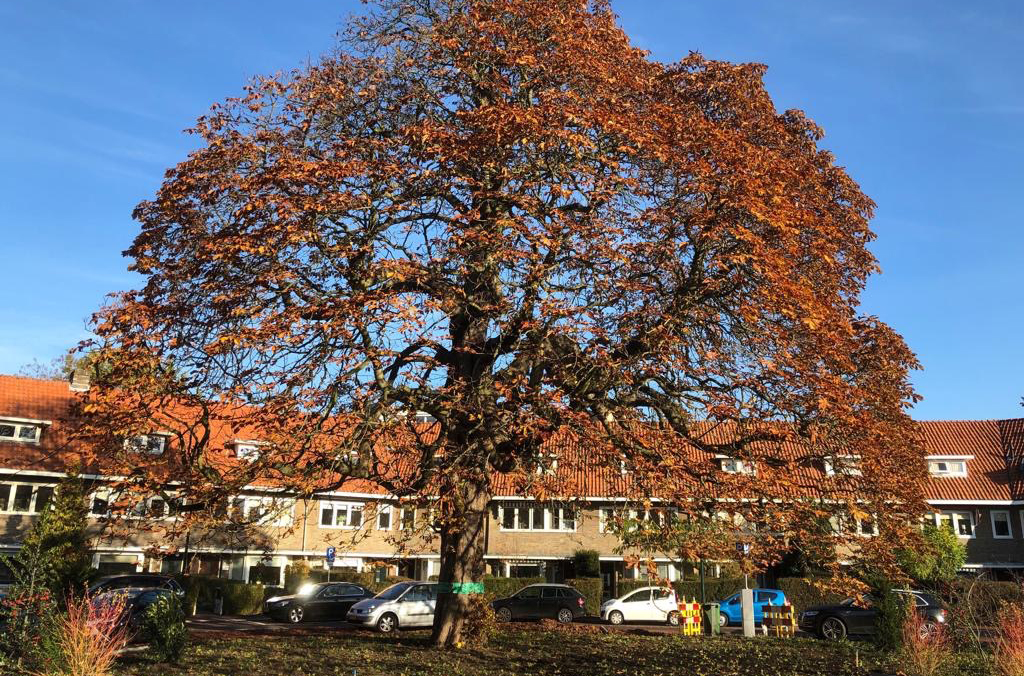 Hoefakker buitenruimte Hogewegplantsoen Zeist groener kunst monumentale boom (18) m