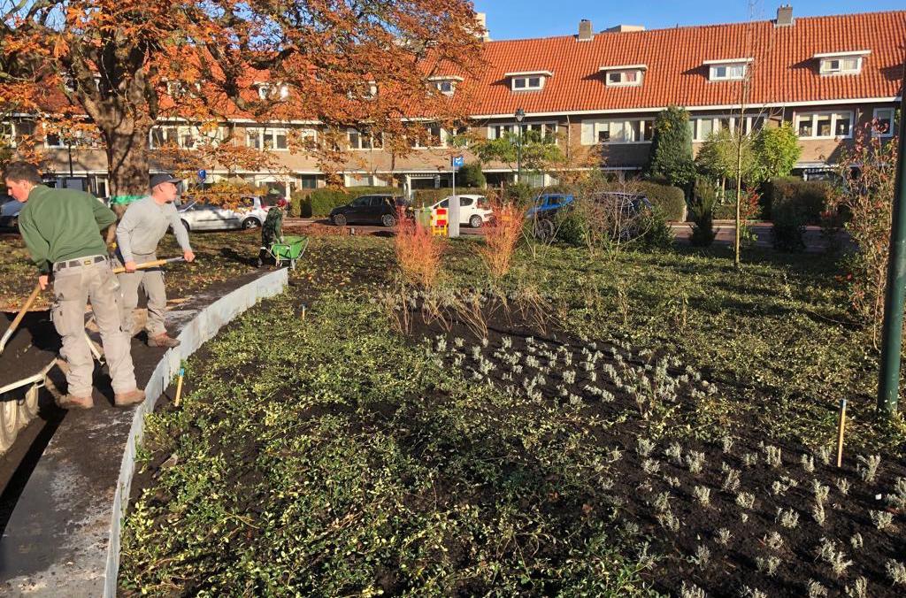 Hoefakker buitenruimte Hogewegplantsoen Zeist groener kunst monumentale boom (4) m