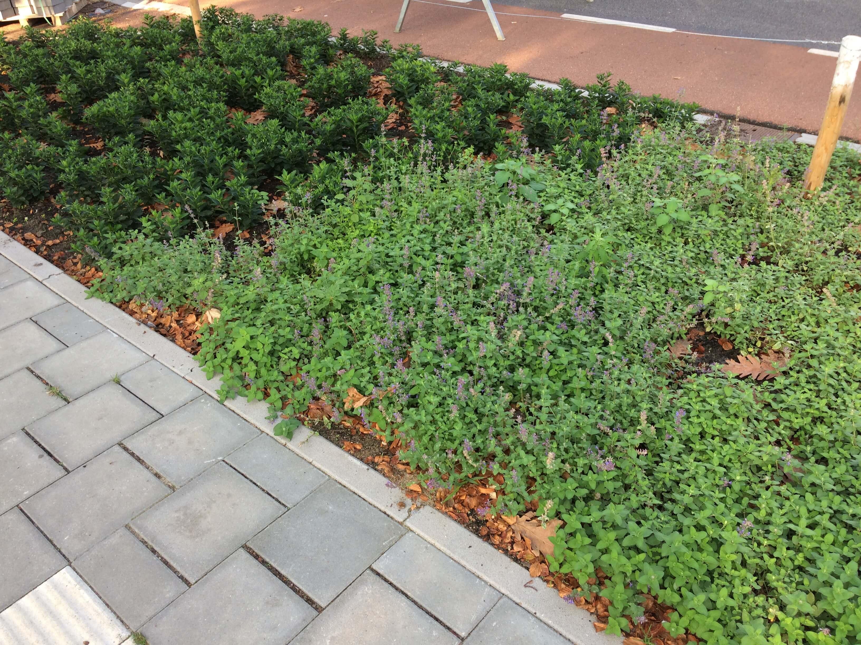 Hoefakker buitenruimte beplanting Zeist Bergweg (11)