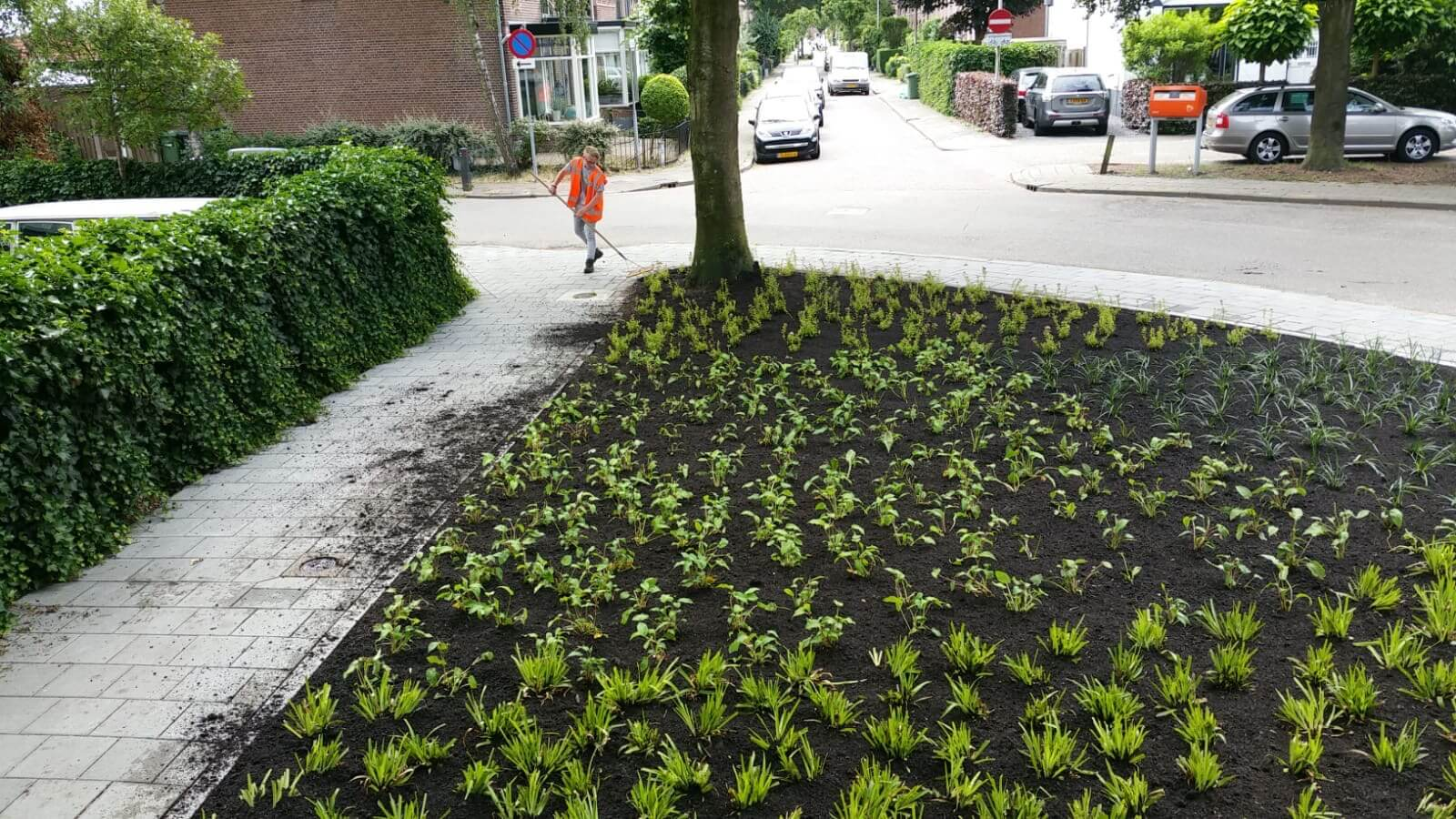 Hoefakker buitenruimte beplanting Zeist Bergweg (12)