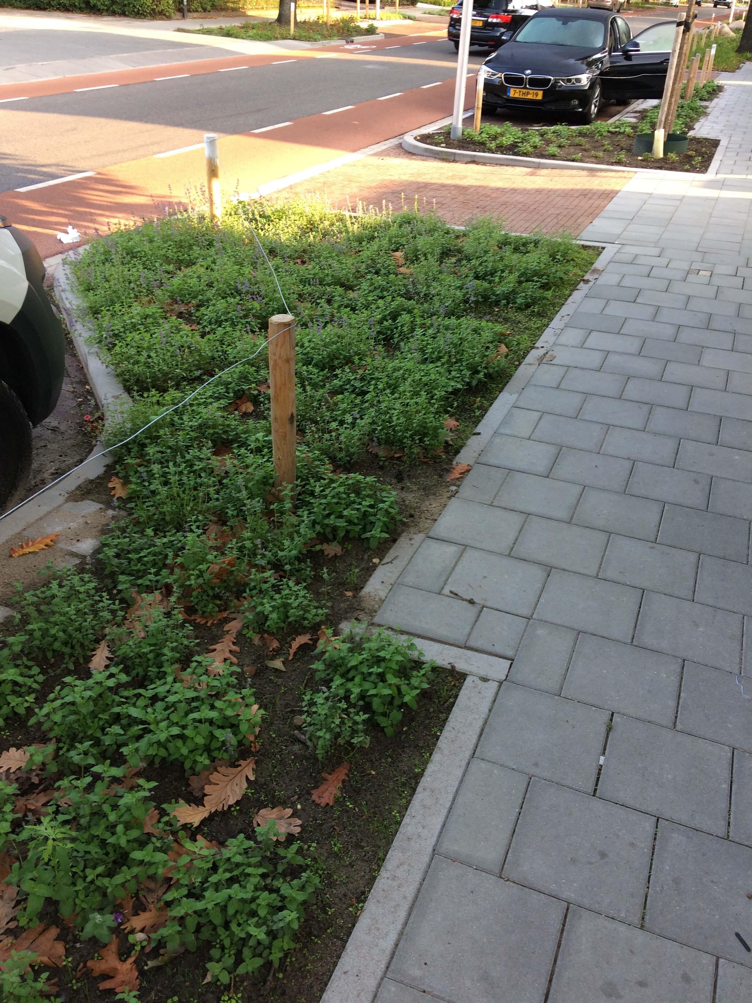 Hoefakker buitenruimte beplanting Zeist Bergweg (5)