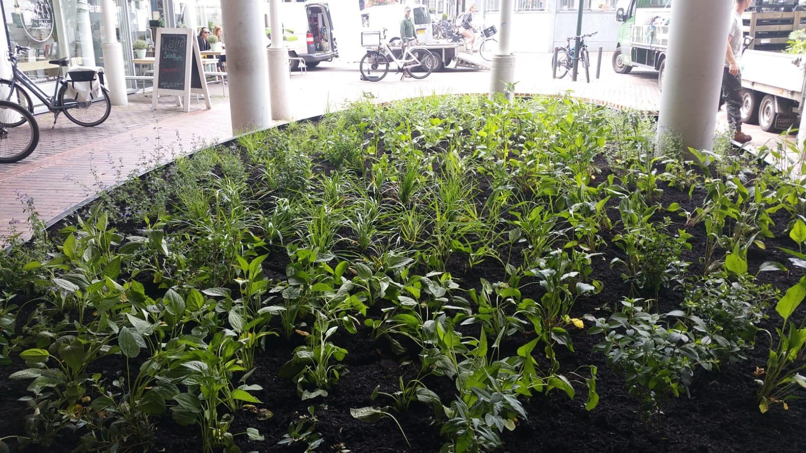 Hoefakker buitenruimte beplantingsplan cortenstalen bak Hilversum (1)