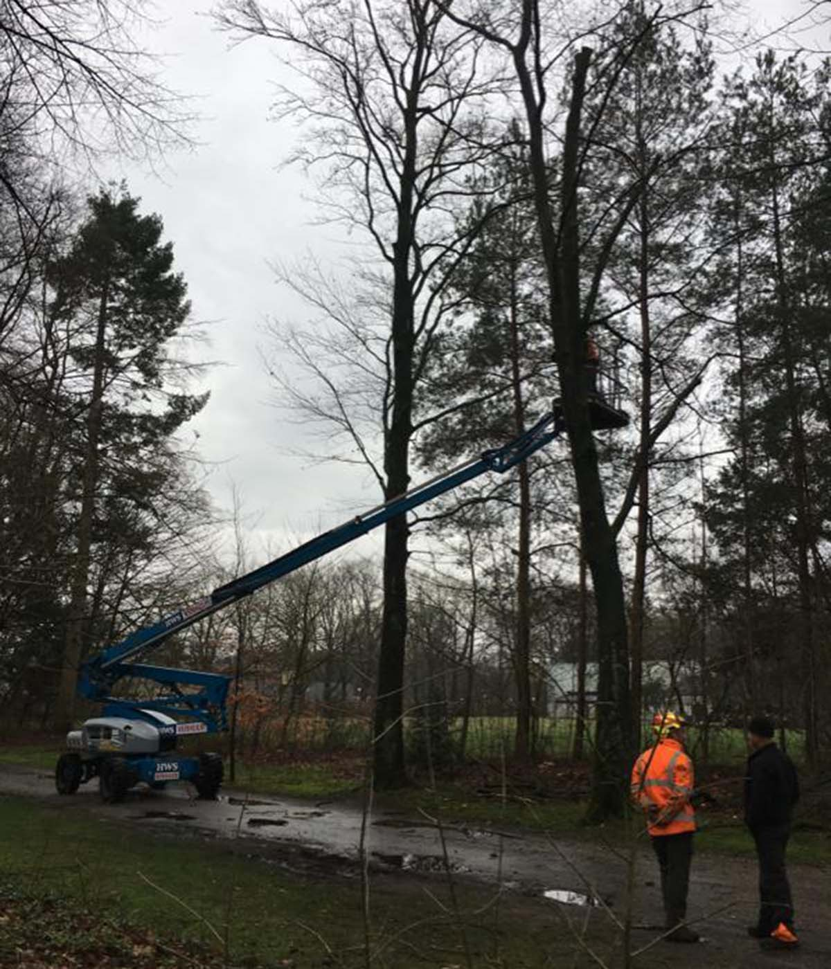 Hoefakker boomspecialisten - snoeiwerkzaamheden hoge bomen landgoed Valkenheide Maarsbergen 20-02-17 (3)