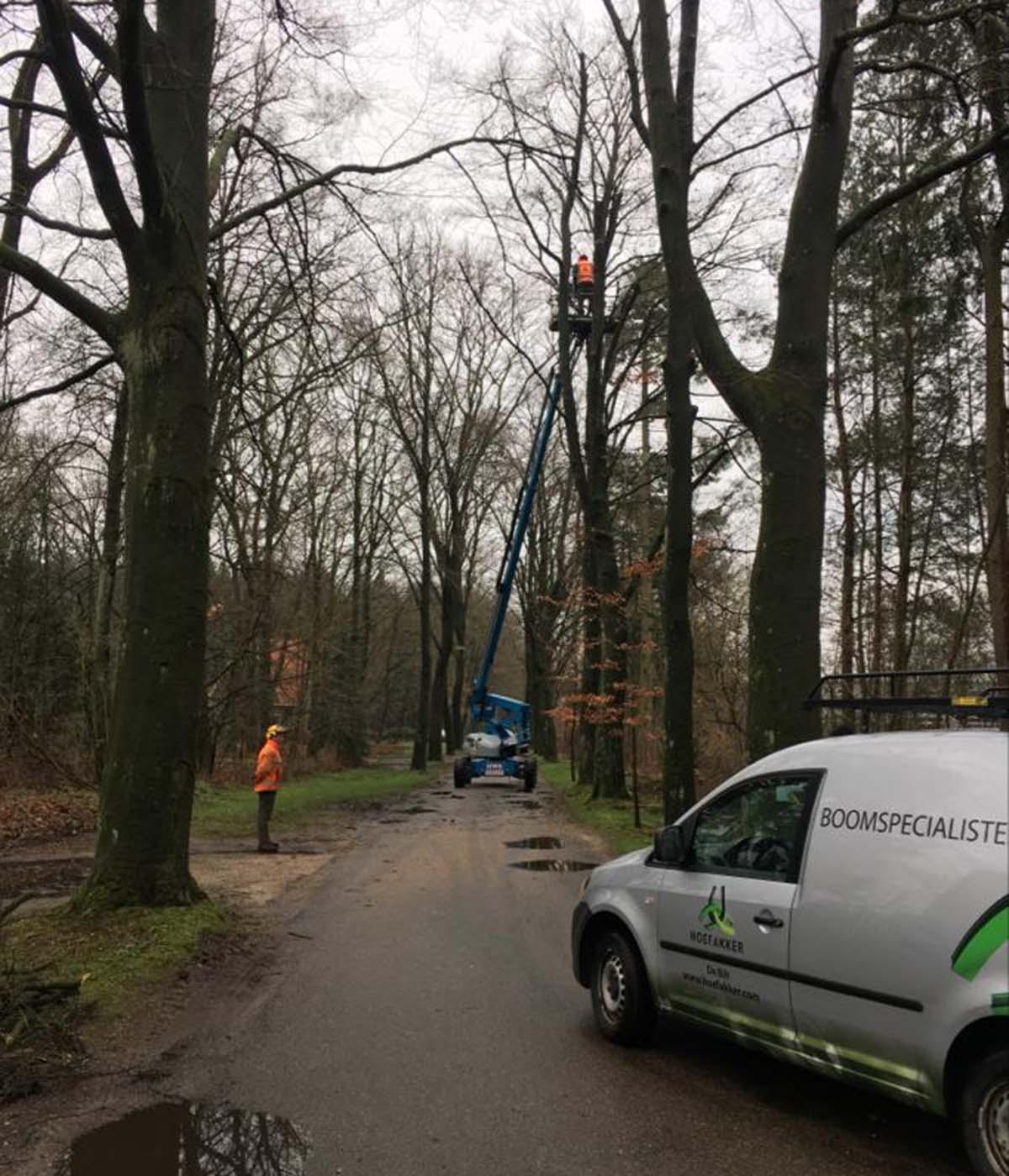 Hoefakker boomspecialisten - snoeiwerkzaamheden hoge bomen landgoed Valkenheide Maarsbergen 20-02-17 (4)