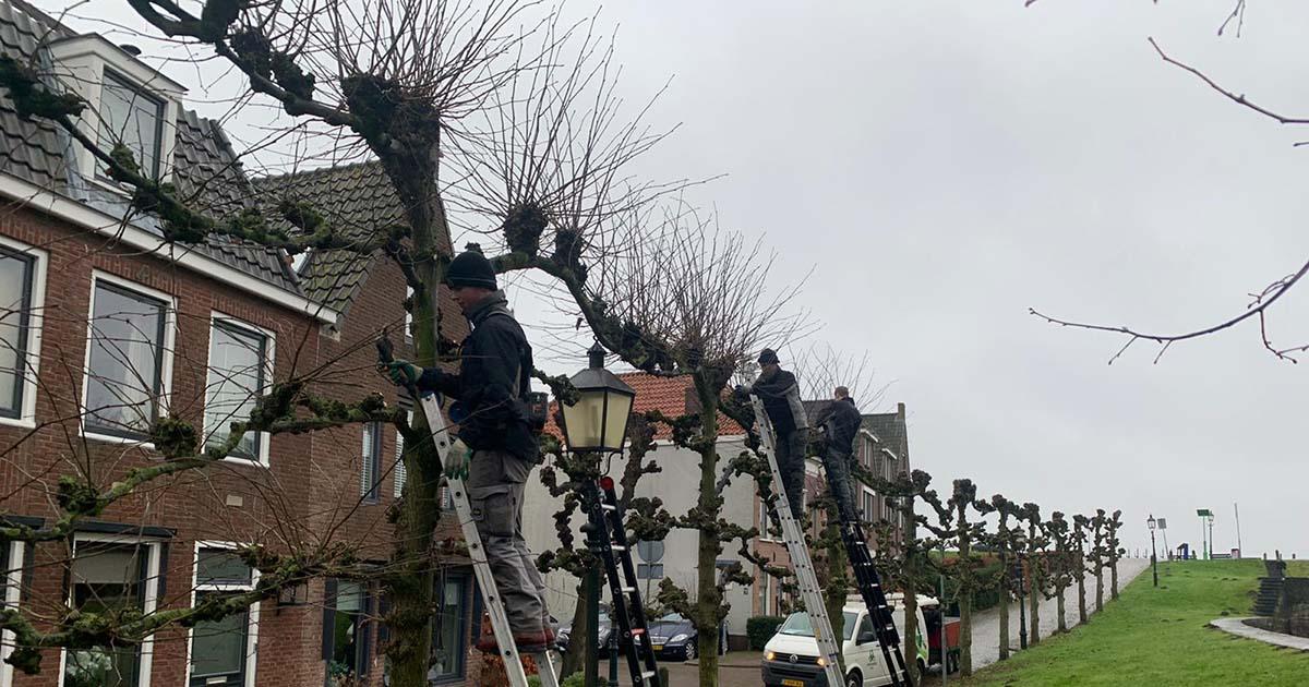 Hoefakker boomspecialisten 161 leibomen snoeien Nieuwegein 2