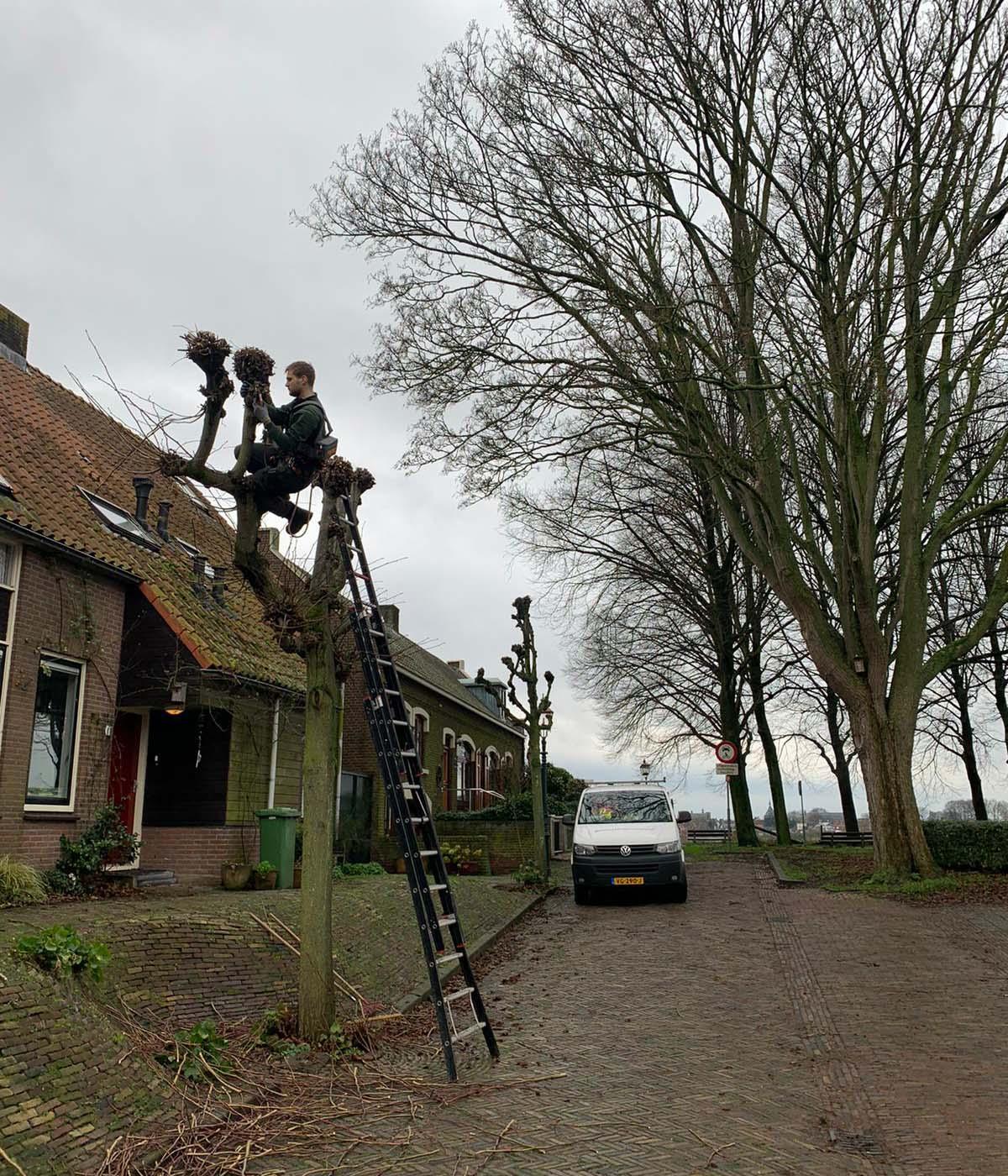 Hoefakker boomspecialisten 161 leibomen snoeien Nieuwegein 3
