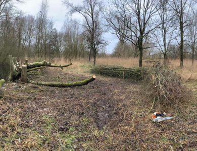 Hoefakker boomspecialisten 25 broekbomen snoeien en hout op takkenril Nieuwegein 1