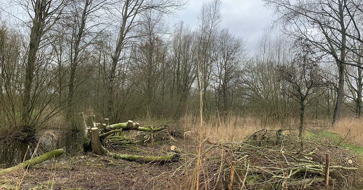 Hoefakker boomspecialisten 25 broekbomen snoeien en hout op takkenril Nieuwegein 2