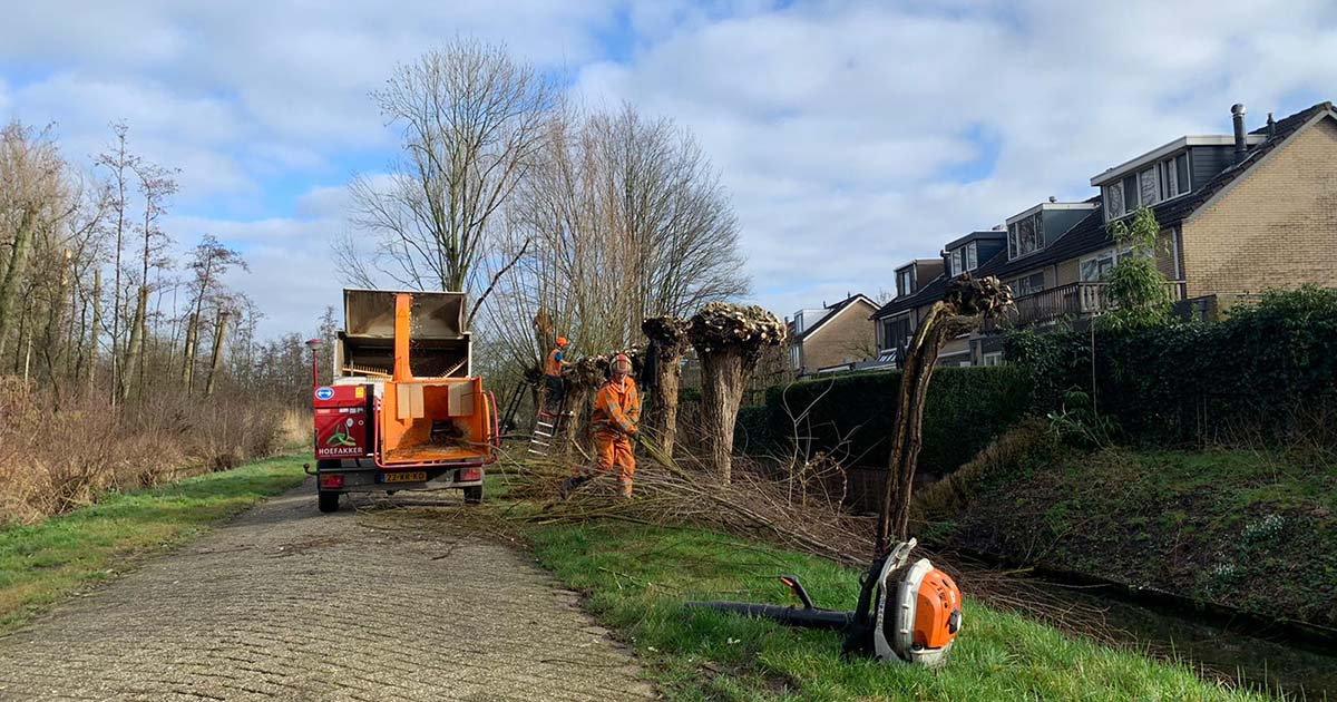 Hoefakker boomspecialisten 842 knotbomen snoeien Nieuwegein 2