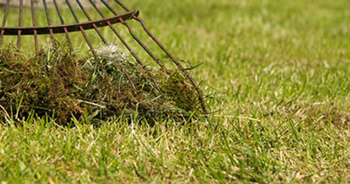 Hoefakker tuinonderhoud april gazon verticuteren voorbereiding