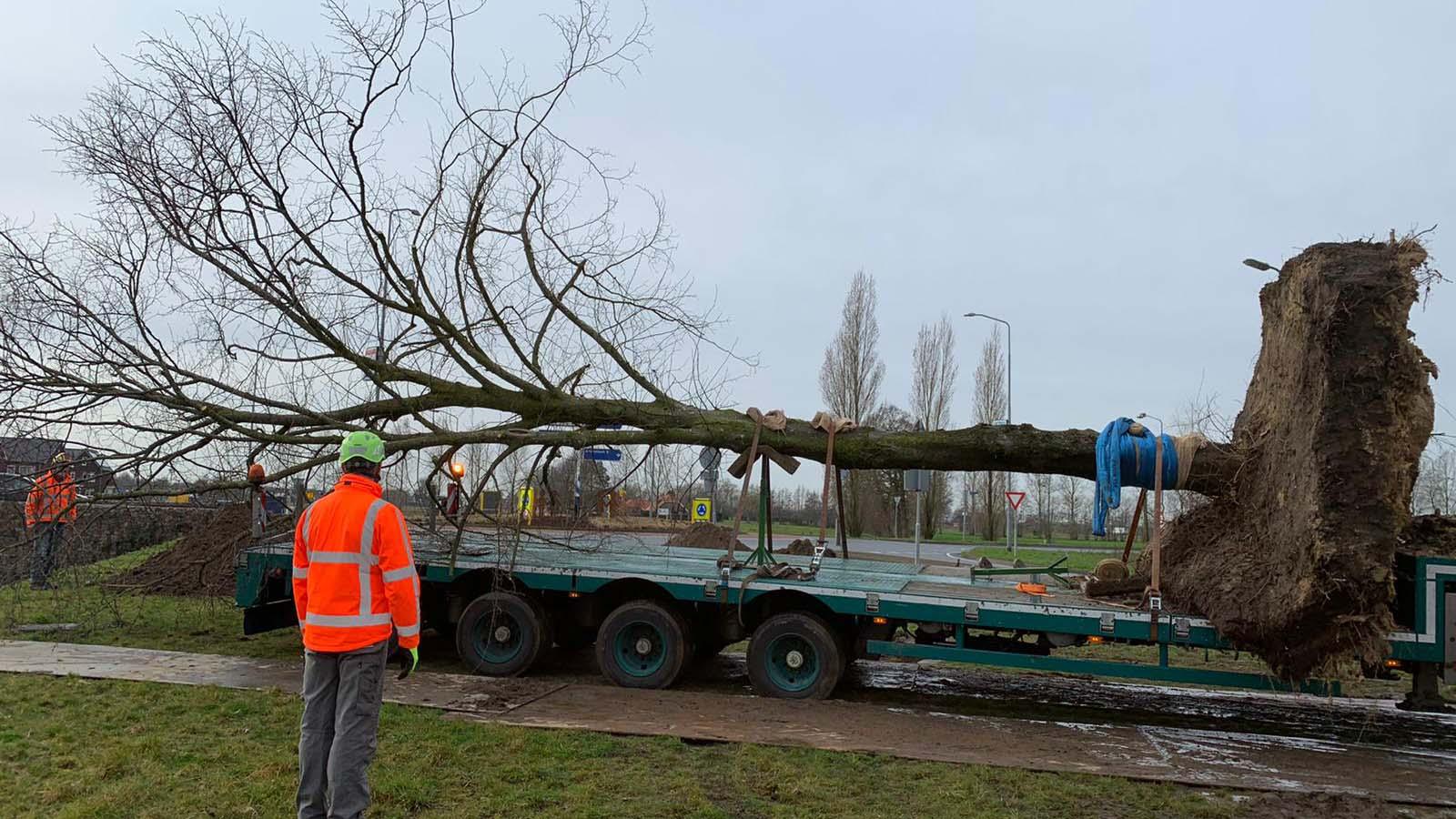 Hoefakker boomverplanting 2 linden Nijkerk