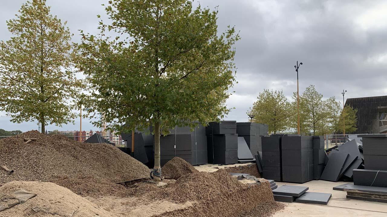 Hoefakker boomverplanting Gemeente Utrecht Berlijnplein (3)
