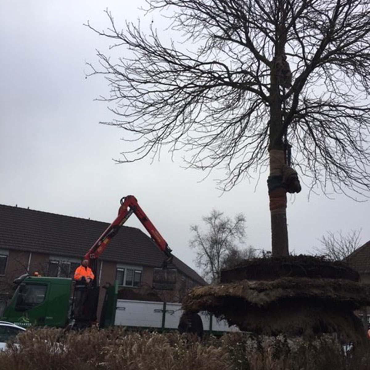 Hoefakker boomverplanting rode paardenkastanje Veenendaal