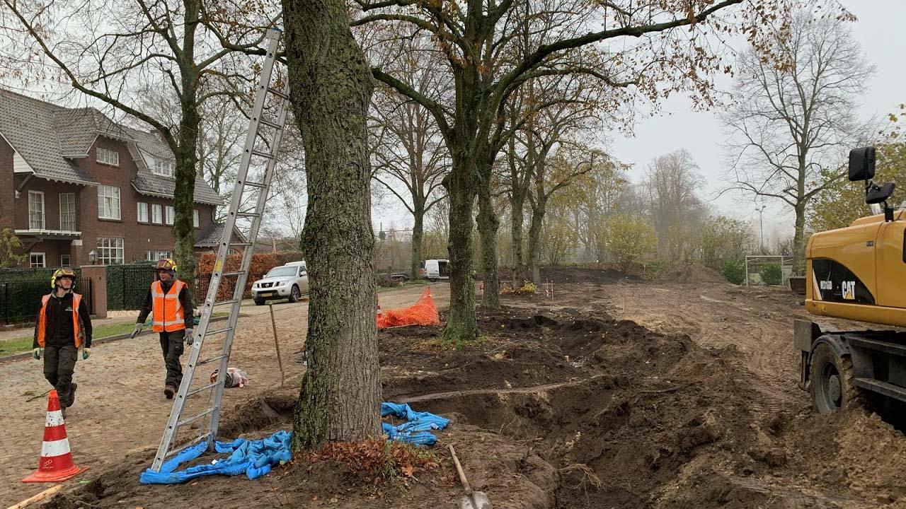 Hoefakker boomverplanting vijf lindebomen Vught