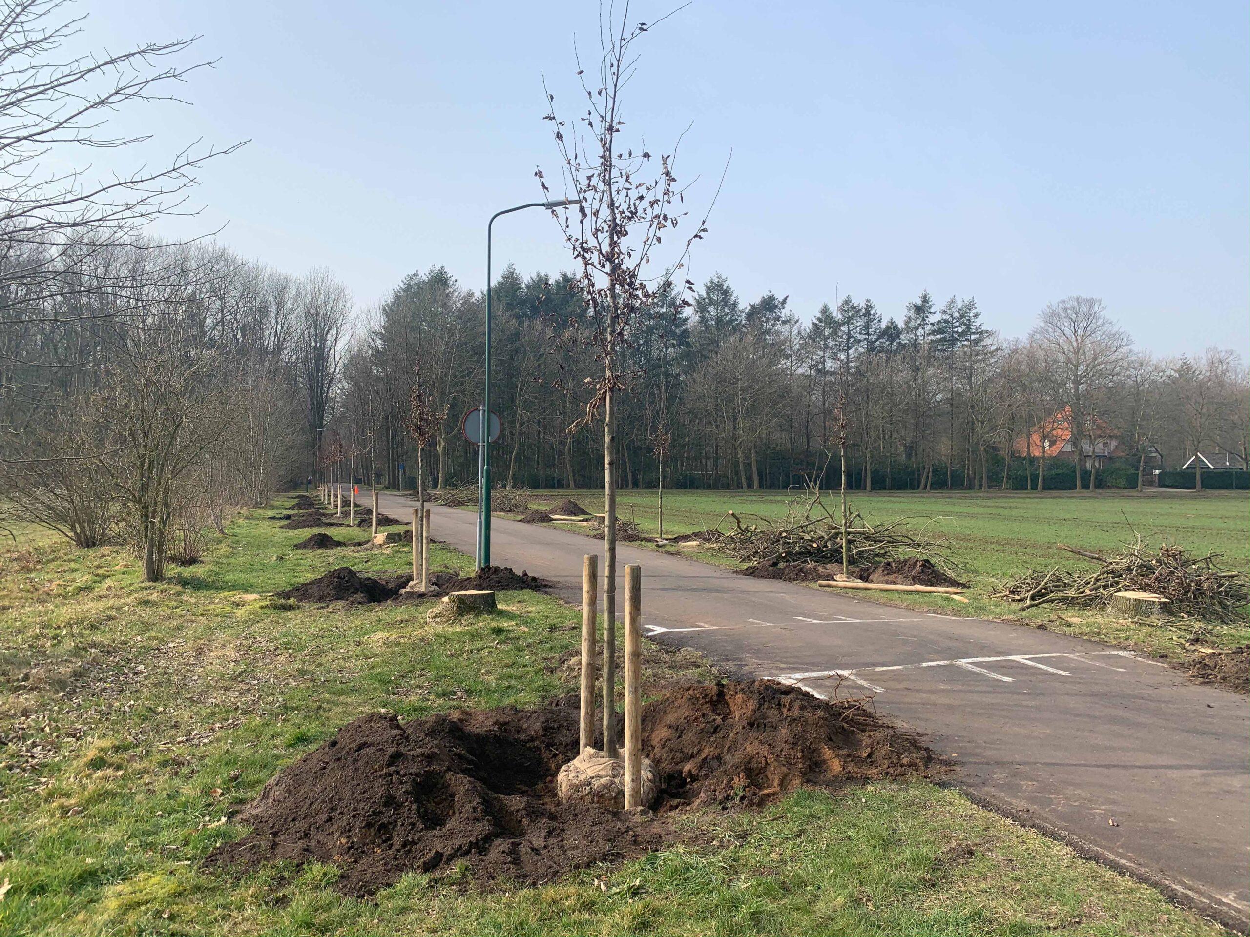 Hoefakker Boomspecialisten Planten 22 bomen Pluryn Maarsbergen